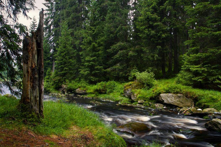 Modravský potok | národní park šumava