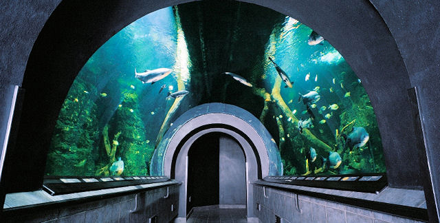 Obří akvárium hradec králové hradec králové