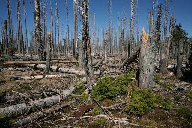 Výsledek obrázku pro foto šumava kůrovec